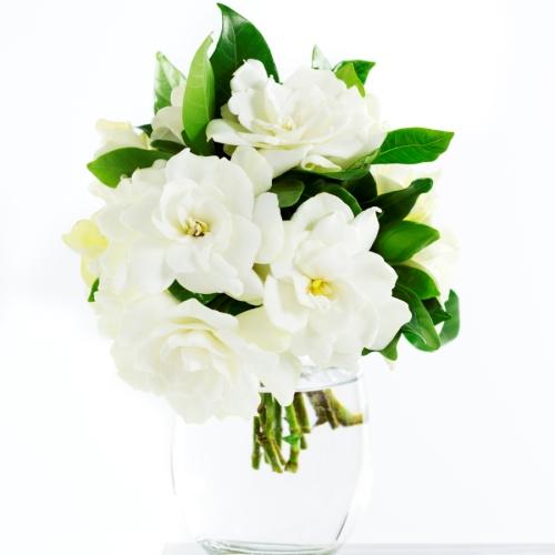 Sejarah Bunga Melati Bunga Melati Semarang